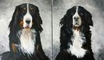 Bernersennenhunde - Acryl - Petra Hörsch