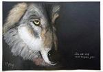 Alter Wolf - Pastell- Petra Hörsch