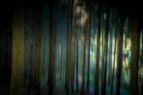 Im Wald - Sabine A. Hartert